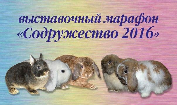 http://www.karlik-krolik.ru/SLK2016/1.jpg
