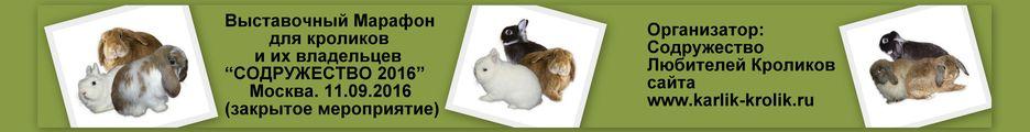 Выставка кроликов.