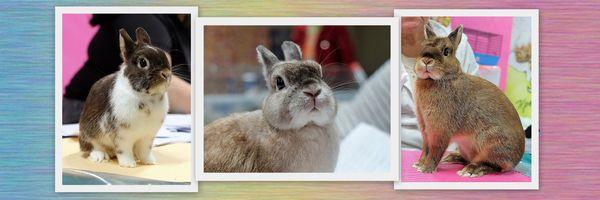 Выставочный Марафон для кроликов и их владельцев.