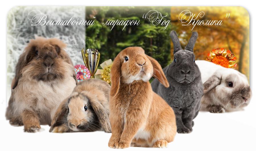 кролик купить в Москве