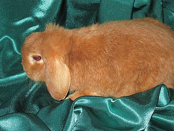 кролик купить москва