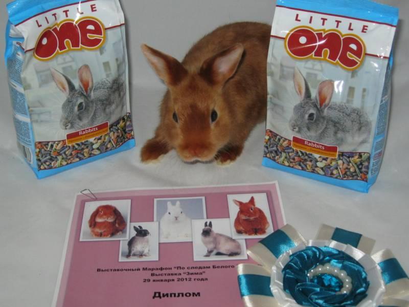 кролик питомник