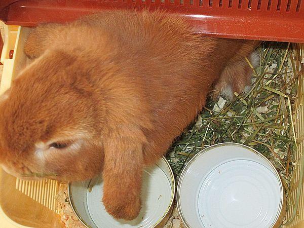 кролик продажа