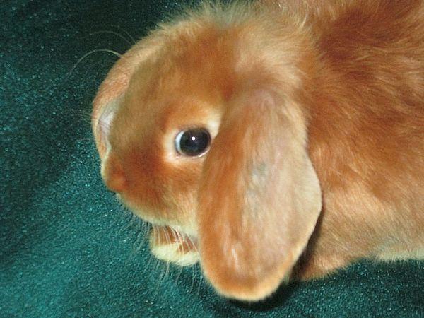 питомник кролик