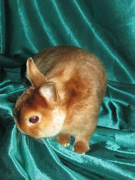 кролик купить
