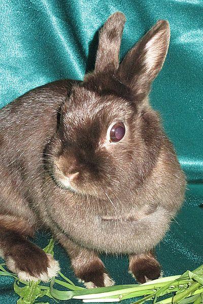 кролик цена