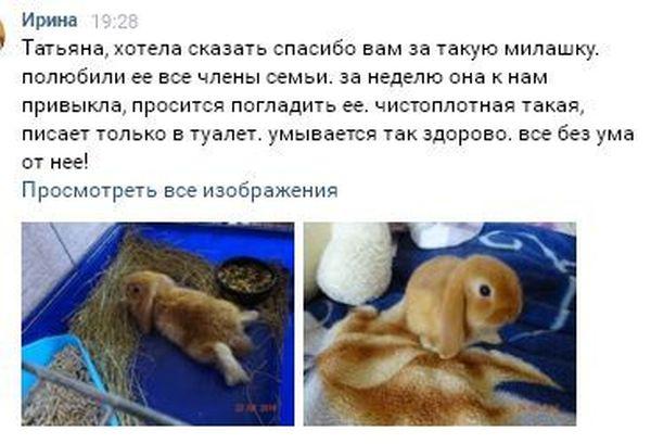 Кролики. Отзывы покупателей