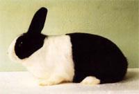 Окрасы кроликов 128
