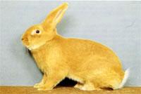Окрасы кроликов 58a