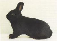 Окрасы кроликов 96