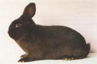 Окрасы кроликов 98