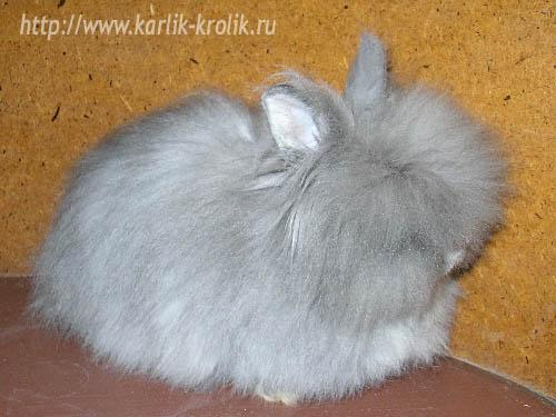 http://www.karlik-krolik.ru/vystavki/07022004/b/1252-1.jpg